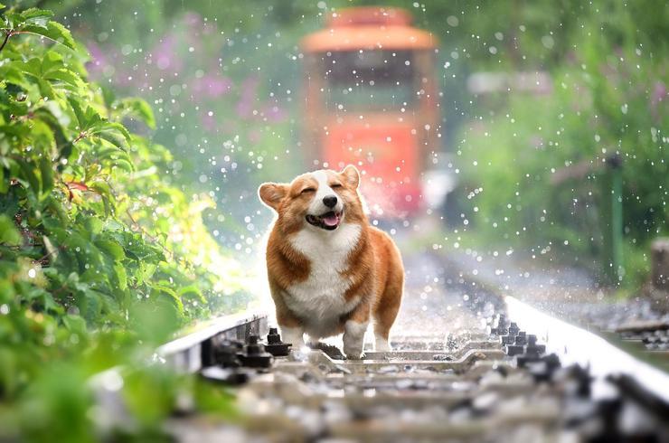 狗狗可愛,學習牠享受當下也很重要。
